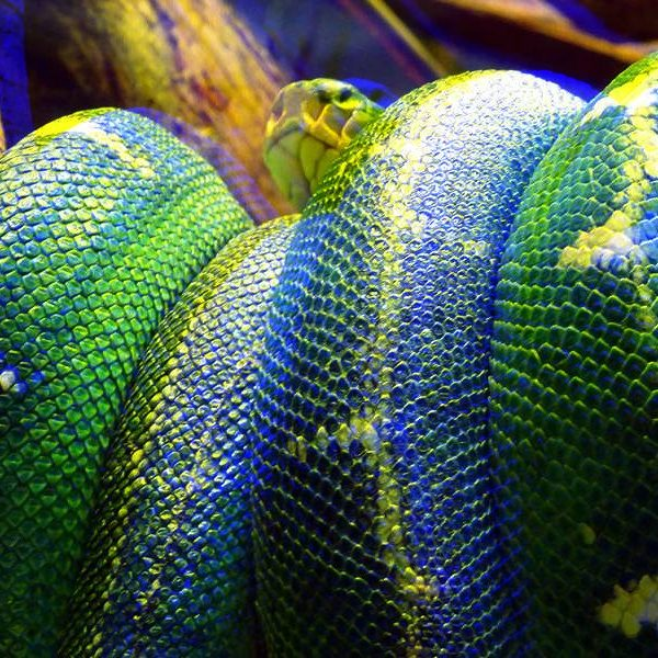 4 Python IDEs